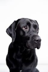 Erfaringer med (service)hundesøges